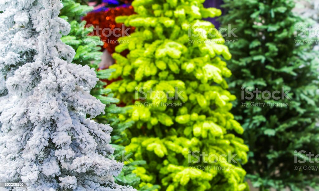 Flocked Christmas Tree with multi colors. Artificial snow covered fir stock photo