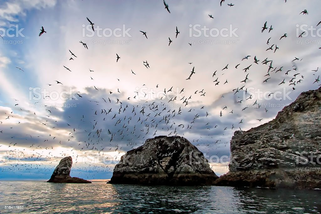 Flocking gulls in Kachemak Bay stock photo