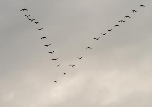 Flocking The V