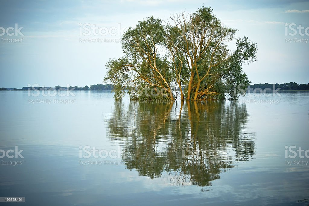 Flood at the Elbe River stock photo
