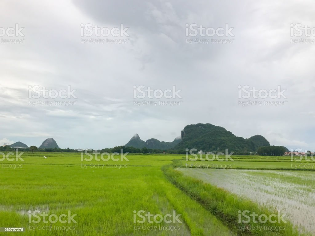 flood in rice field and mountain foto stock royalty-free