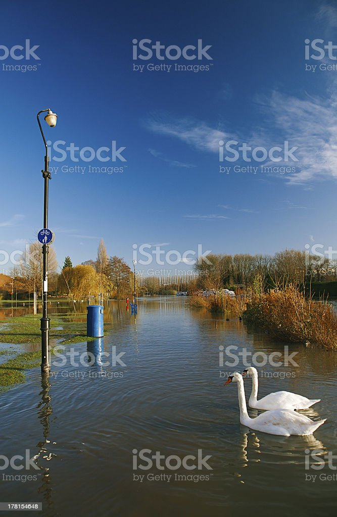 flood in UK, river Thames  Reading royalty-free stock photo