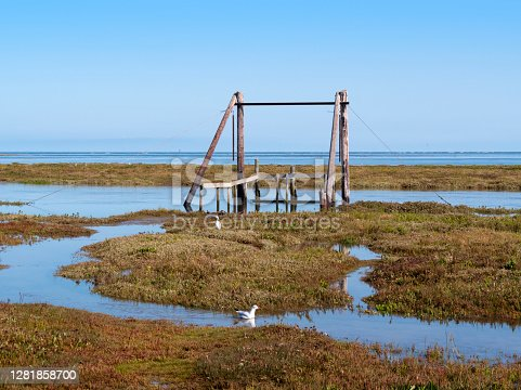 An extra high 'spring tide' on a sunny day at Thornham in Norfolk, Eastern England, overflowing the beach and marshes, with a submerged landing stage. A gull is swimming in the water as a little egret looks for food. Waves can be seen breaking in the distance.
