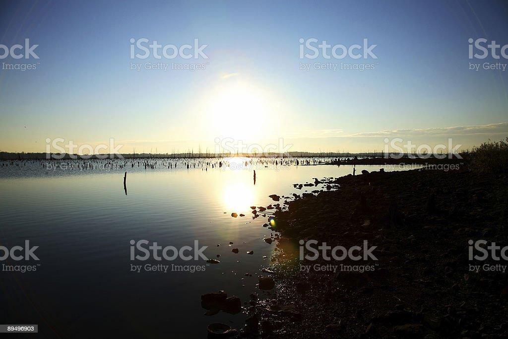 Zalane Las scena-słońca zbiór zdjęć royalty-free