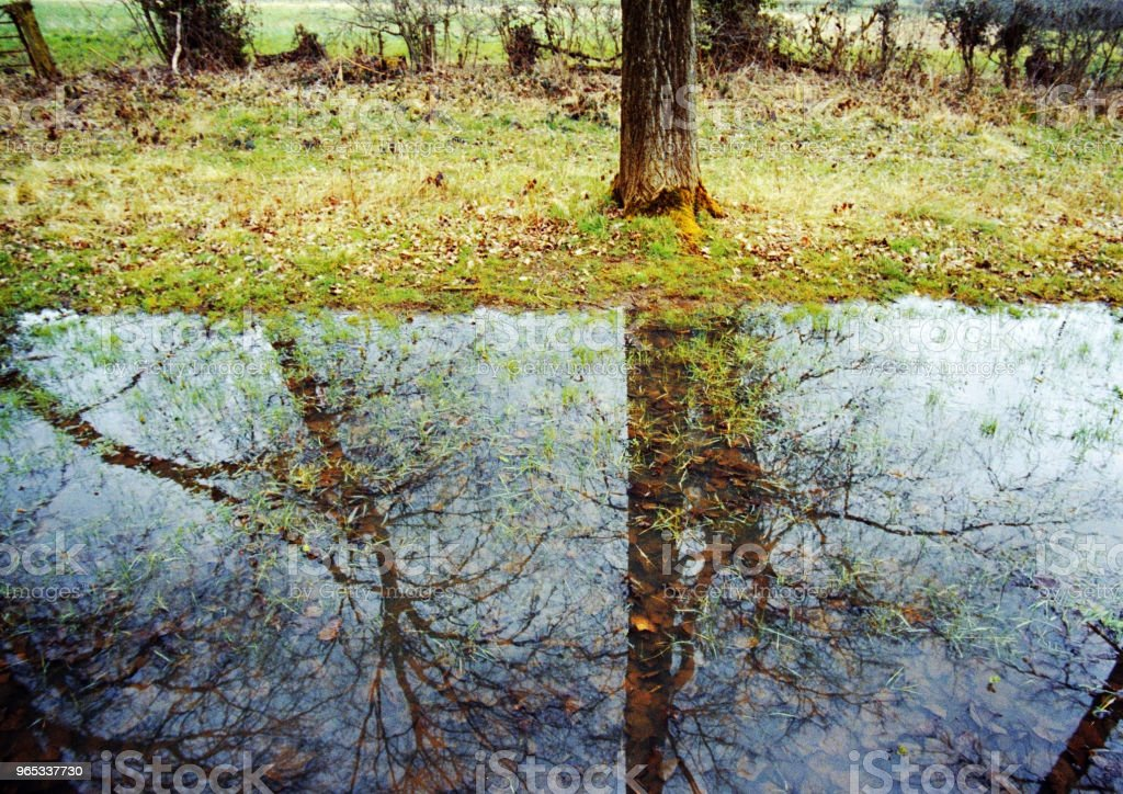 flooded forest trees rain reflections weather water royalty-free stock photo