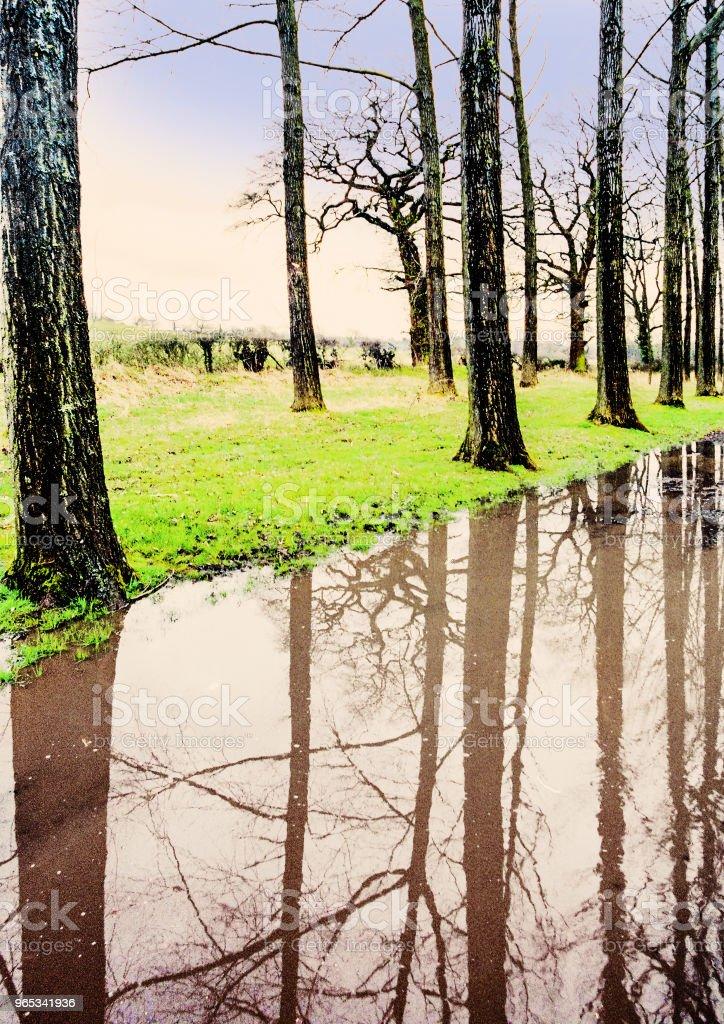 洪水淹沒森林樹木雨反射天氣水 - 免版稅反射圖庫照片