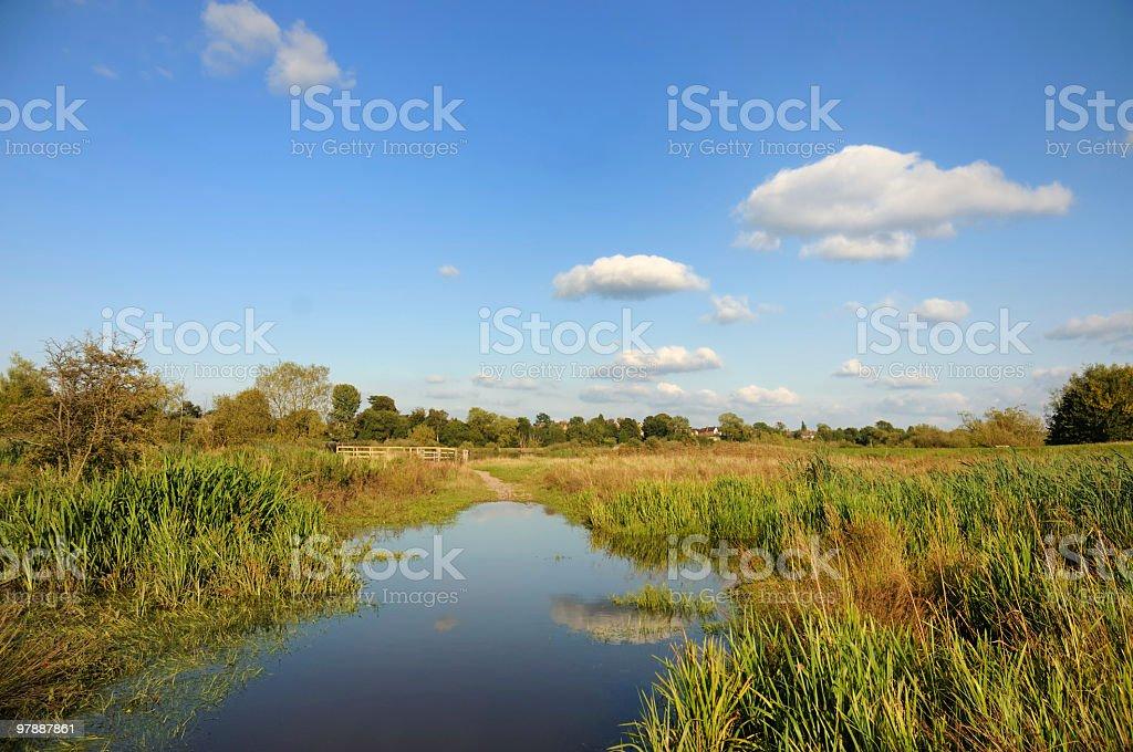 Flooded Marshland stock photo