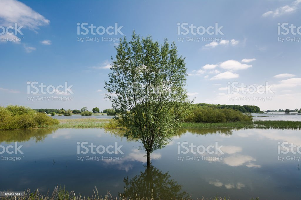 Flooded Mirror royalty-free stock photo
