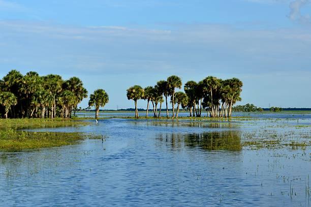 Flooded pasture stock photo