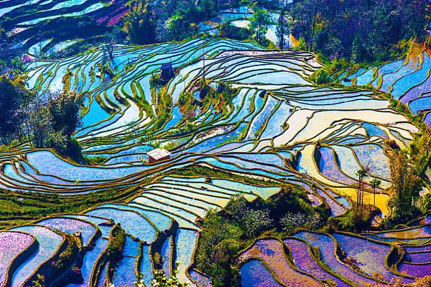 Viel Reis Felder in South China – Foto