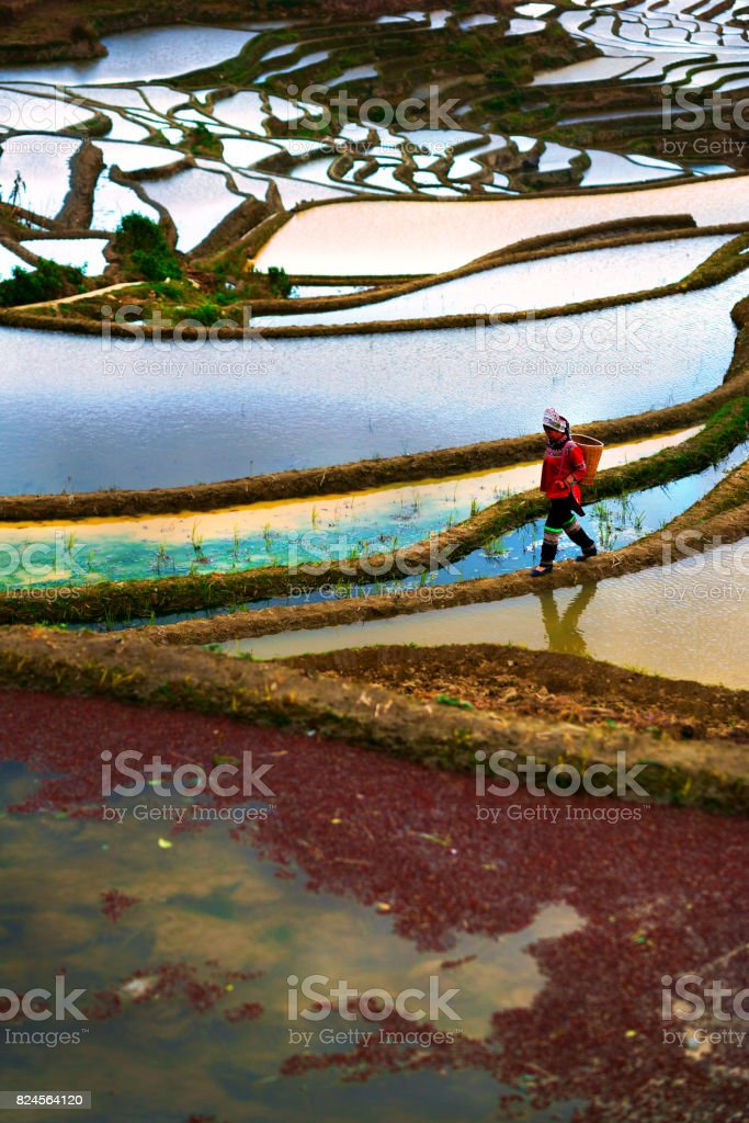 Flooded rice fields in South China stock photo