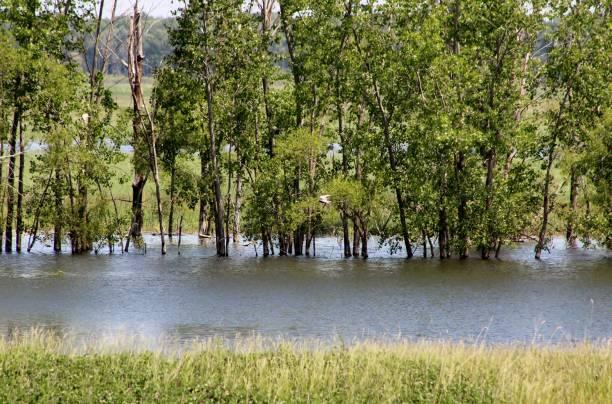 Flooded trees stock photo
