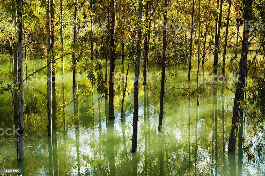 Flooding, trees in water of reservoir Lake Zahara, Andalusia, Spain stock photo
