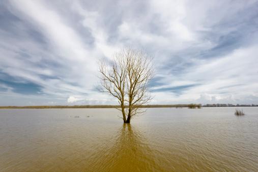 Floodland Stock Photo - Download Image Now