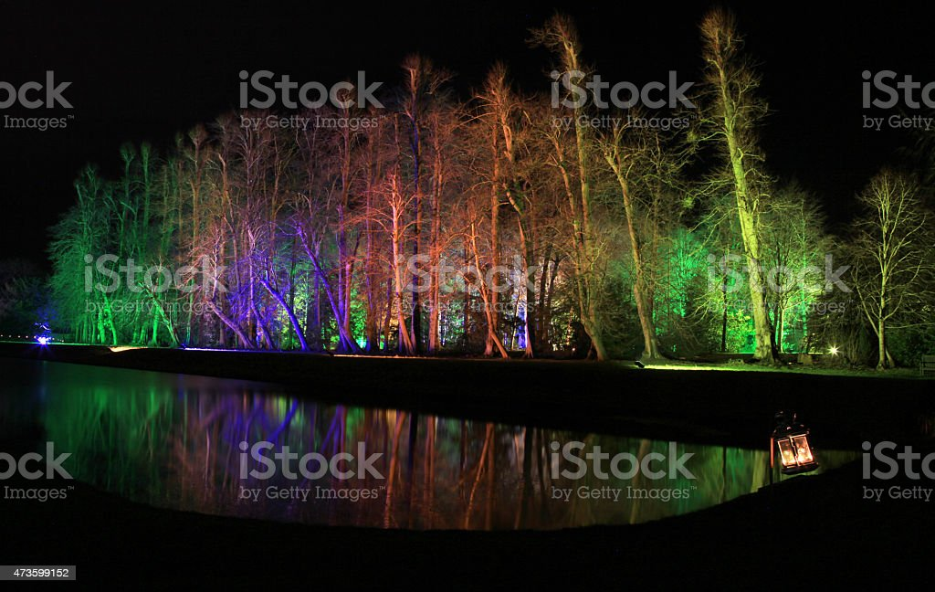 Floodlit Tree Reflection Multicoloured floodlights light up trees creating a beautiful night time reflection on a calm winter evening 2015 Stock Photo