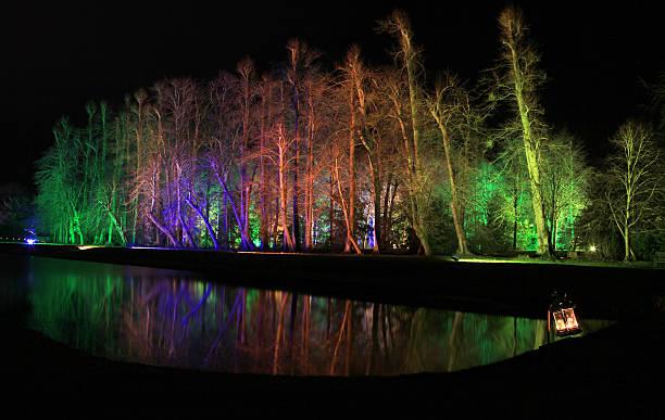 Floodlit Tree Reflection stock photo