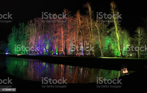 Floodlit Tree Reflection Stock Photo - Download Image Now