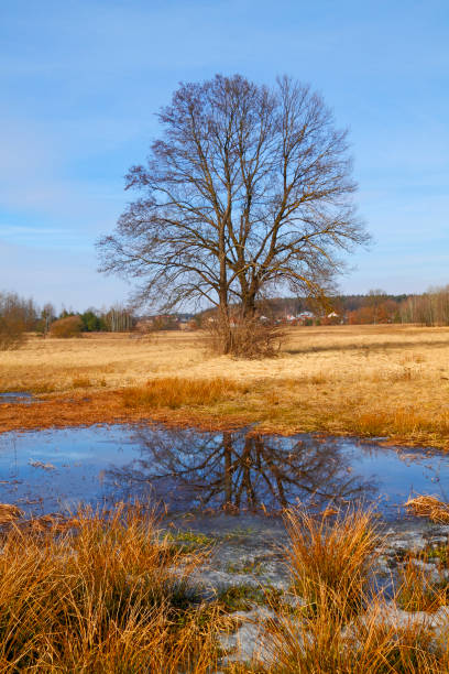 Flood-meadow at early spring stock photo