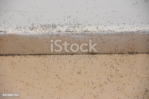 485413653istockphoto A floor full of ants 842960764