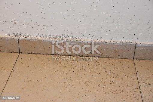485413653istockphoto A floor full of ants 842960776