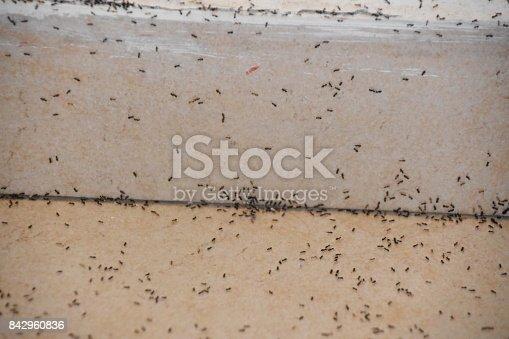 485413653istockphoto A floor full of ants 842960836