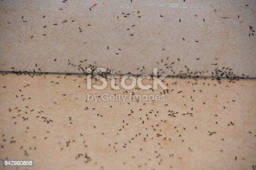 485413653istockphoto A floor full of ants 842960858
