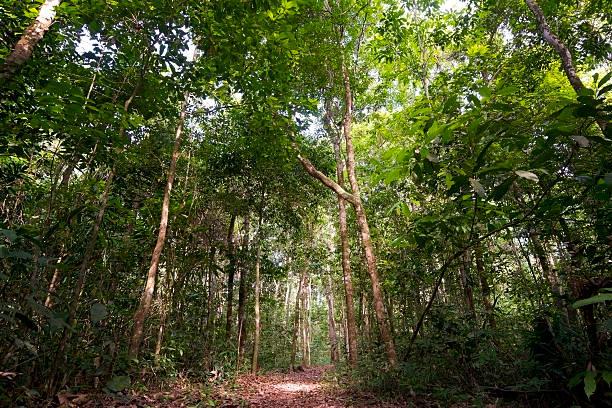 Floor level picture of the Amazon rain forest stock photo