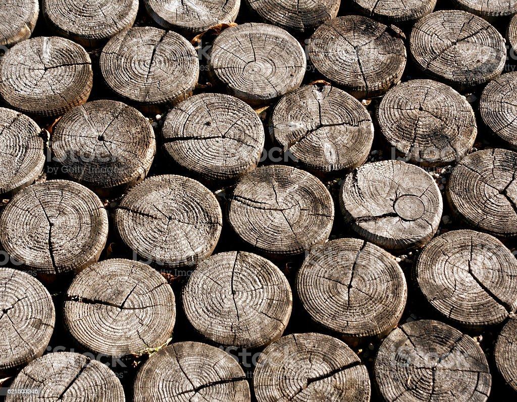 Floor made of circle logs. photo libre de droits