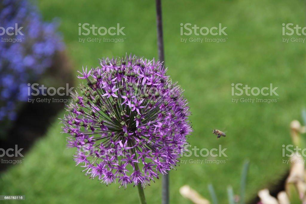 Flora and Fauna at Kew Gardens royalty-free stock photo