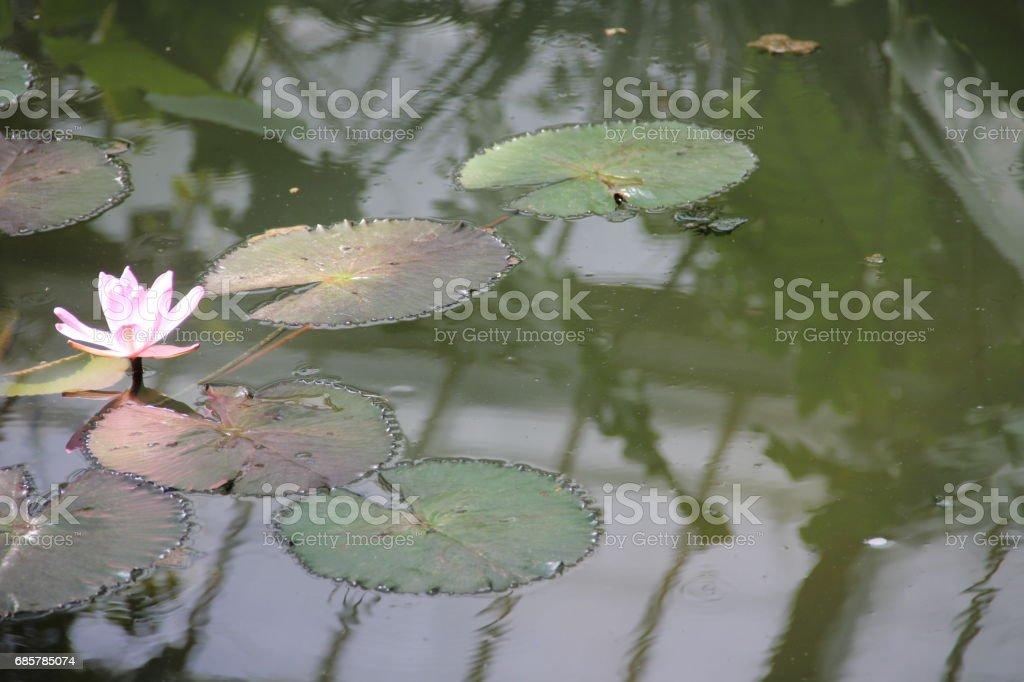 Flora and Fauna at Kew Gardens foto de stock libre de derechos