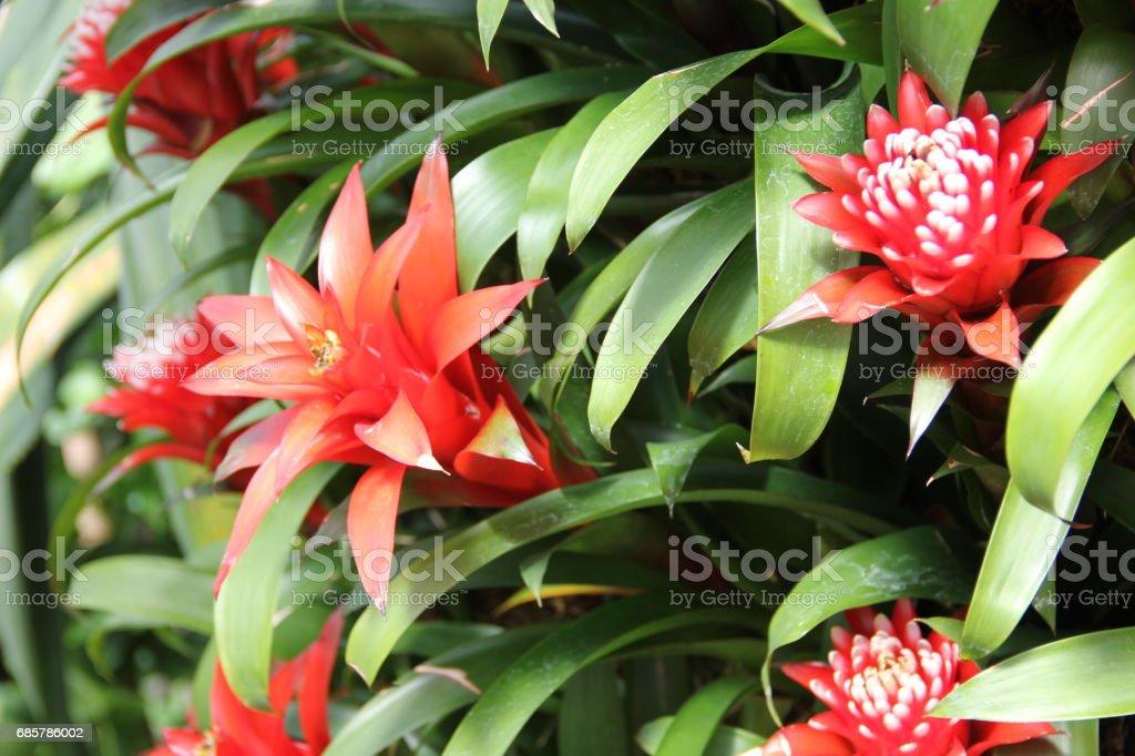 Flora and Fauna at Kew Gardens Lizenzfreies stock-foto