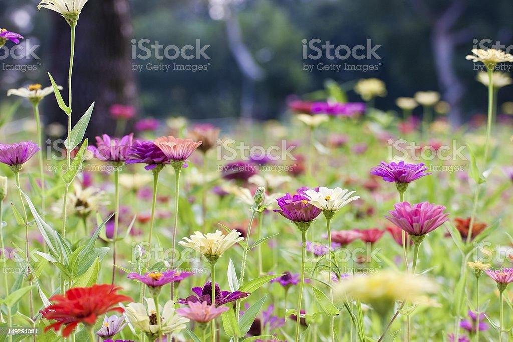 flora background royalty-free stock photo