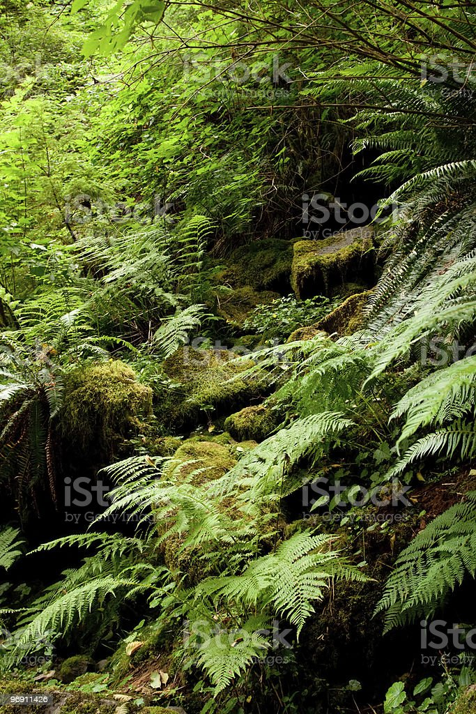 Flora in Oregon wilderness royalty-free stock photo