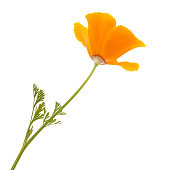 Yellow flower on a white background.