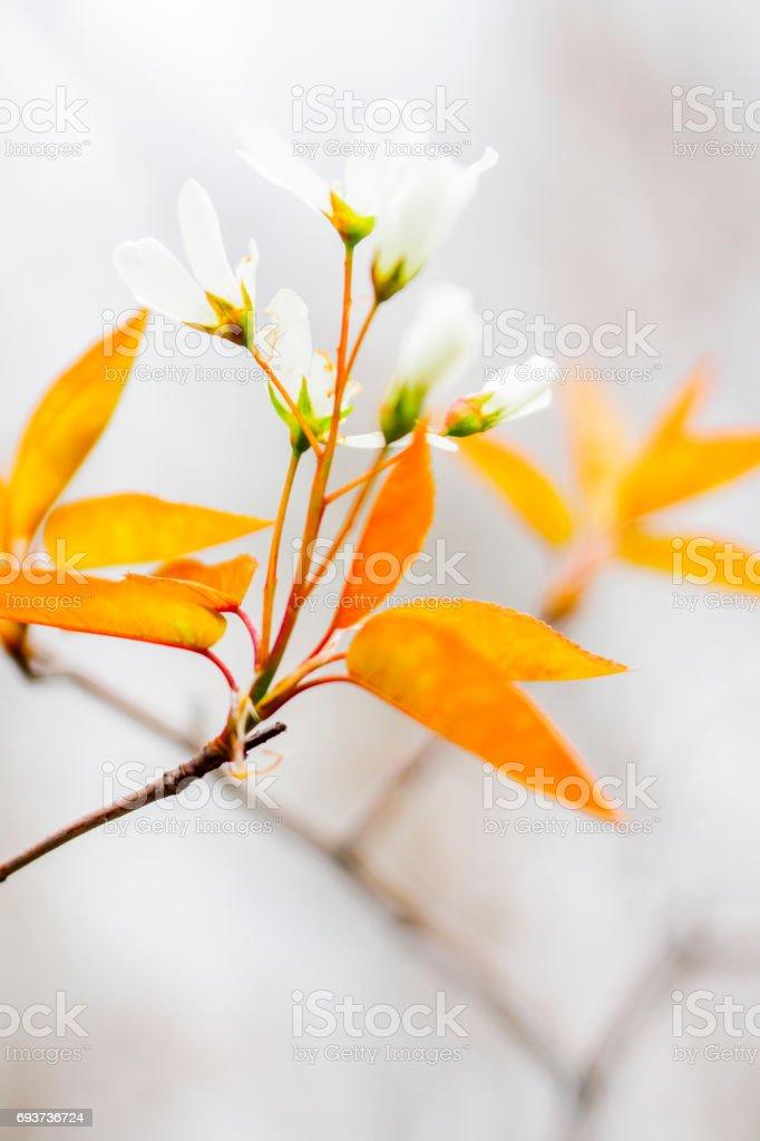 Floraison printanière stock photo