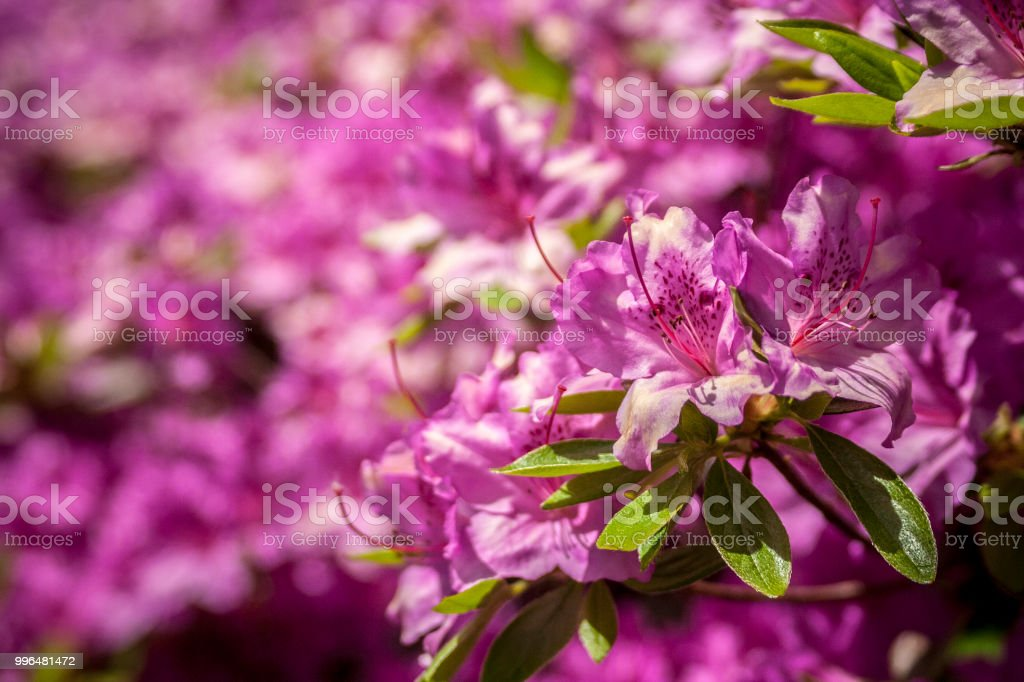 Floral 41 stock photo