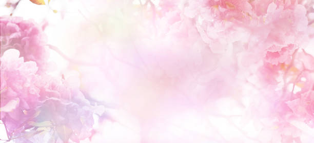Floral abstract pastel background Abstract floral backdrop of pink flowers over pastel colors with soft style for spring or summer time. Banner background with copy space. flowers stock pictures, royalty-free photos & images