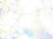 istock Floral abstract pastel background 1163850274