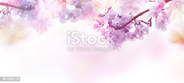901386728 istock photo Floral abstract pastel background with copy space. 901386728