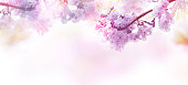 Abstract floral backdrop of purple flowers over pastel colors with soft style for spring or summer time. Banner background with copy space.
