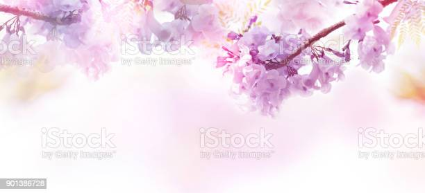 Floral abstract pastel background with copy space picture id901386728?b=1&k=6&m=901386728&s=612x612&h=imqbbss 1k60nwehf60zz4wnn3r4lvzwwawsjw5459i=