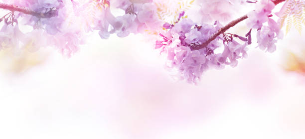 Floral abstract pastel background with copy space. - foto stock