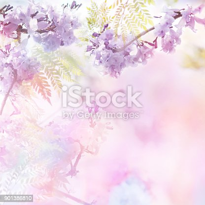 istock Floral abstract pastel background with copy space. 901386810
