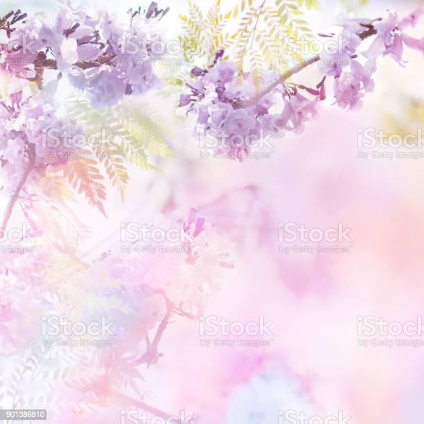 Floral abstract pastel background with copy space picture id901386810?b=1&k=6&m=901386810&s=612x612&h=mx174qxueyiei0m01ybwng4xs5kcipk3zq3ggugl5mw=