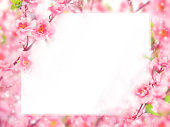 istock Floral abstract pastel background with copy space. 903161032