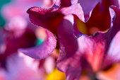Macro shot of garden flowers