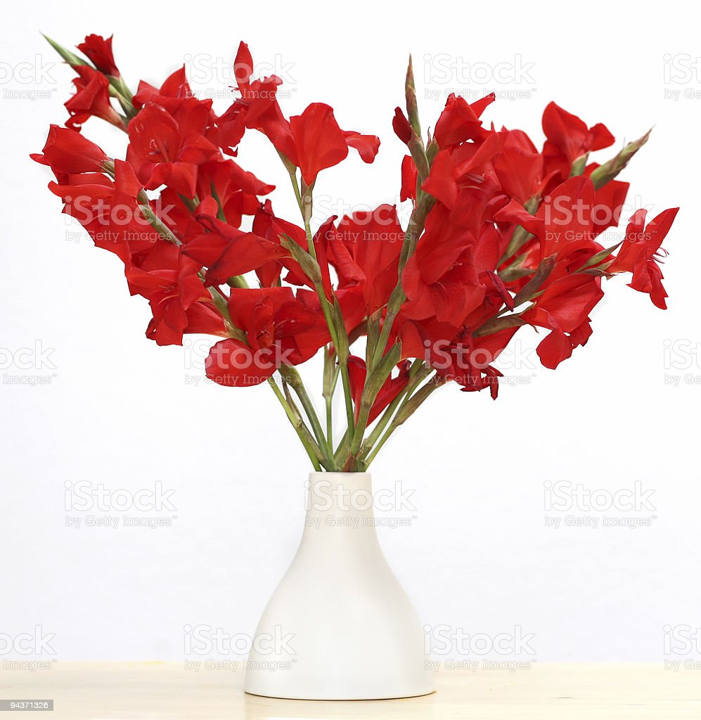 Floral arrangement of red gladioluses in a white vase. royalty-free stock photo