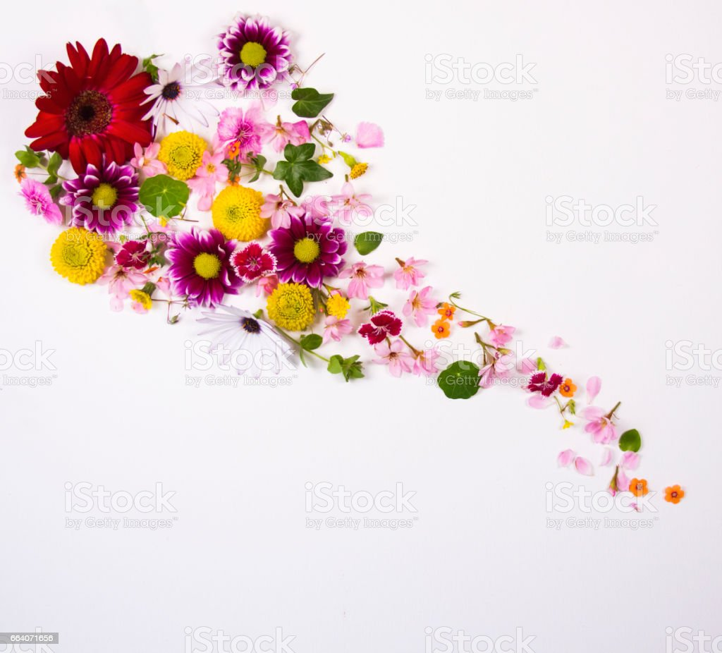 Floral arrangement on a white background stock photo