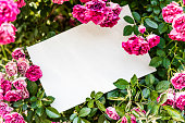 istock Floral background and paper 826304812