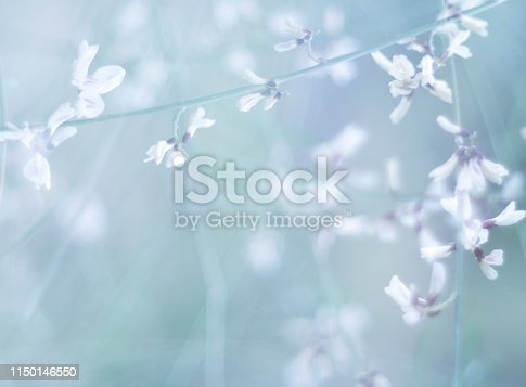 876018792 istock photo Floral background  blue toned .Morning in the field 1150146550